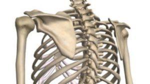 肋骨を緩める